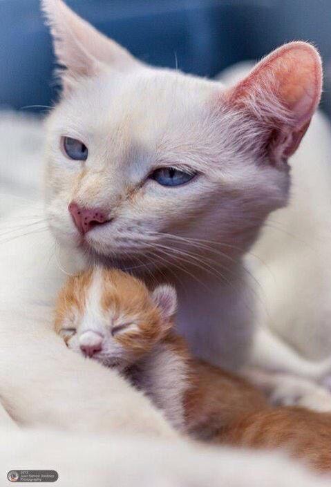 Pin By Idio Genic On Animal Kids W Parents Mama Cat Beautiful
