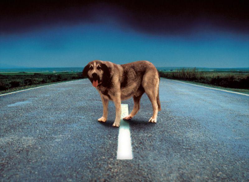 8 formas de ayudar a los perros abandonados  Perros  Pinterest