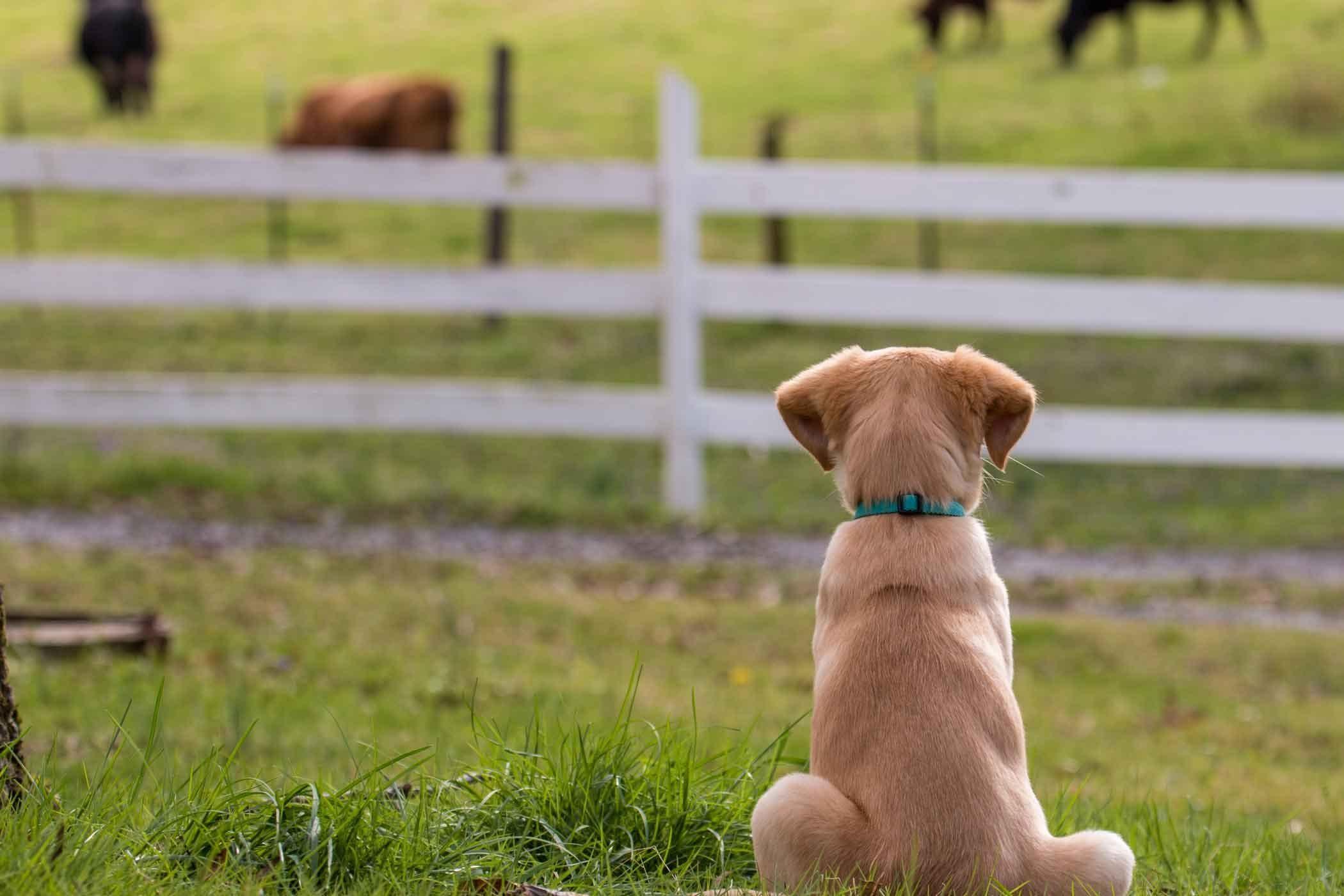 Farmer dog names wag dog names dogs family pet