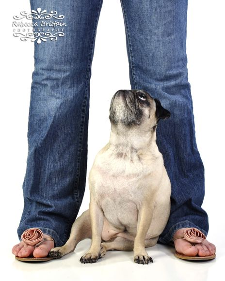 Professional Studio Dog Photography By Rebecca Brittain St