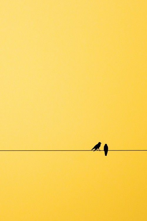 Birds On A Wire Yellow Background Shades Of Yellow Yellow Wallpaper