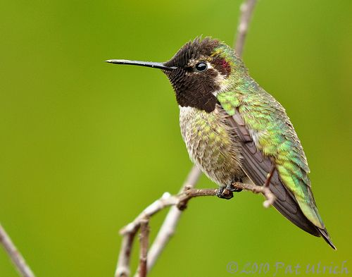Wild Hummingbird At The Zoo Flickr Photo Sharing San Diego Zoo Mini Implants Hummingbird Pictures