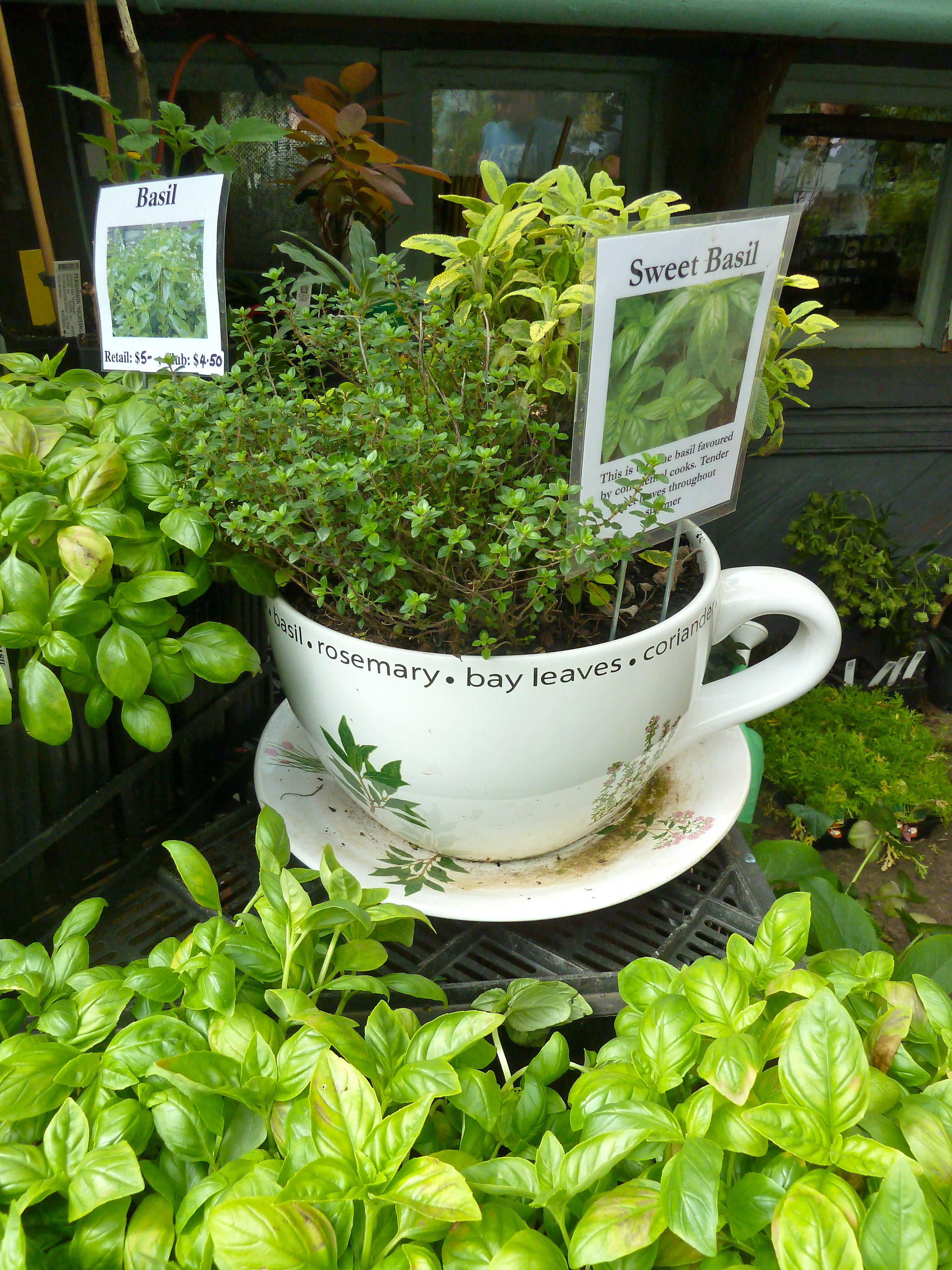 Pin by Jenn Hall on Patch Plant gifts, Garden basket, Herbs
