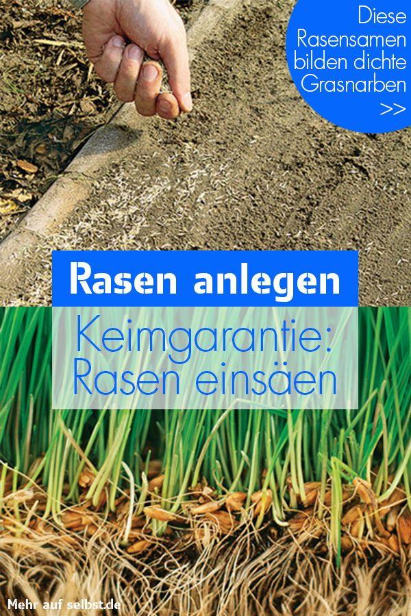 Rasen anlegen   selbst.de