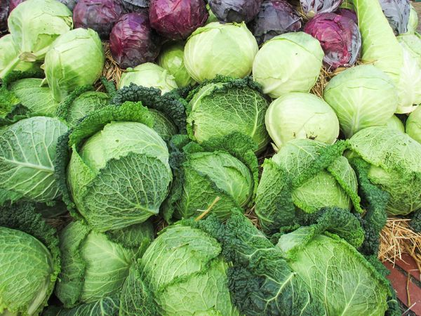 Green and red cabbage is great for your eye health