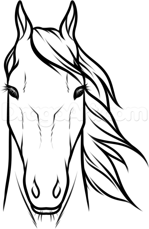 Draw horse heads and faces step 8