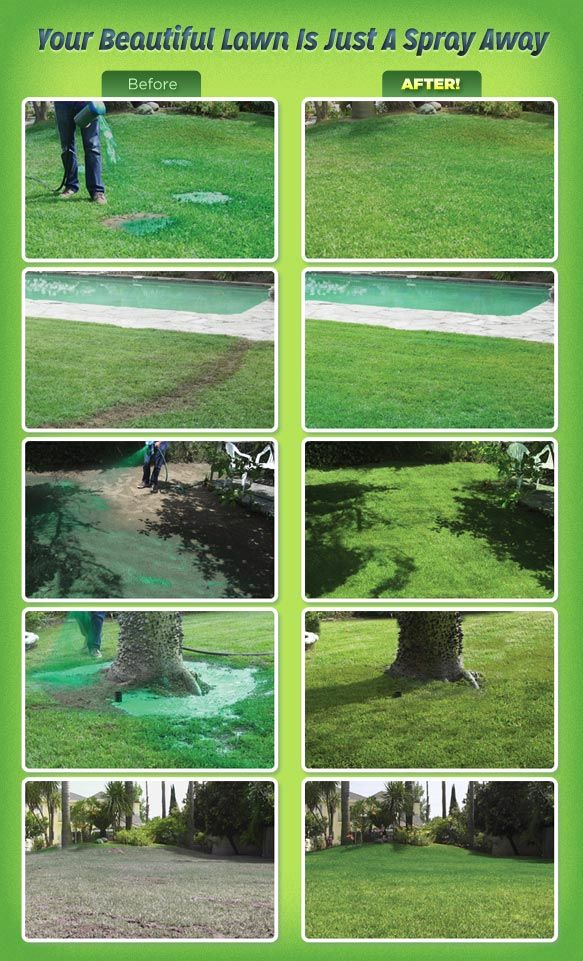 Hydro Mousse Liquid Lawn Before And After Backyard Plants