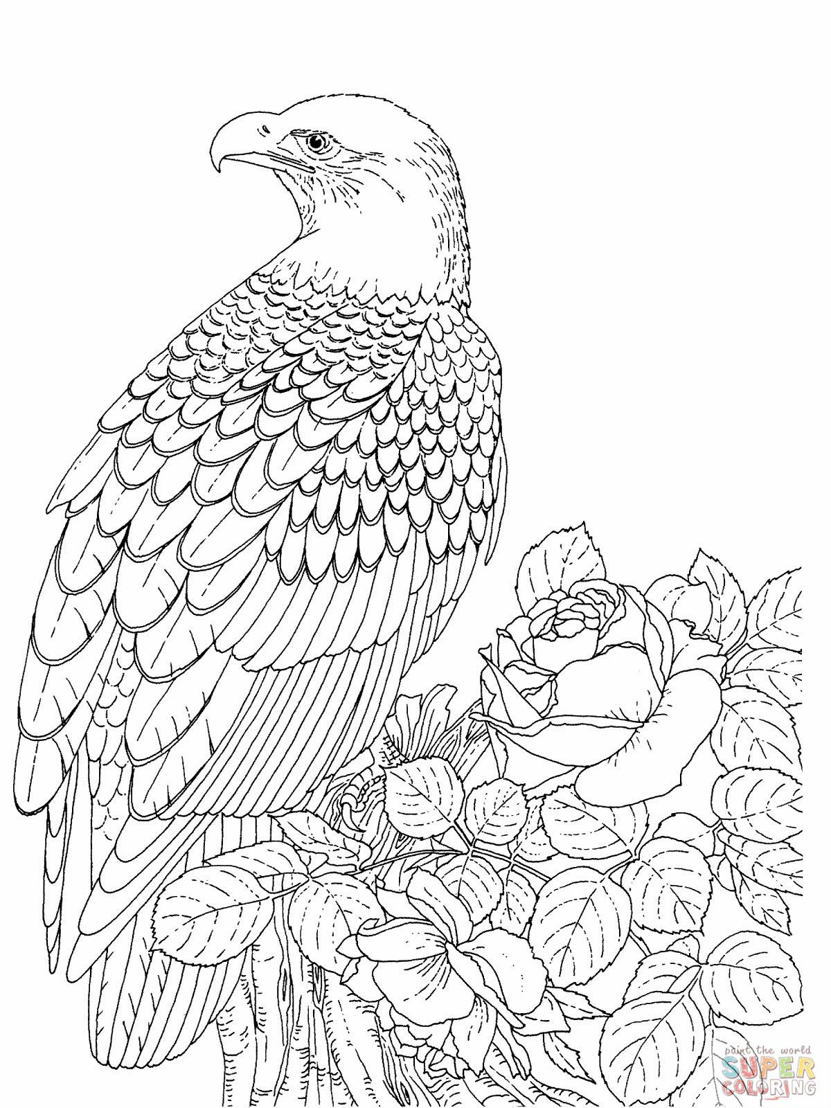 bald eagle coloring pagejpg 12001600 pixels - Realistic Wildlife Coloring Pages