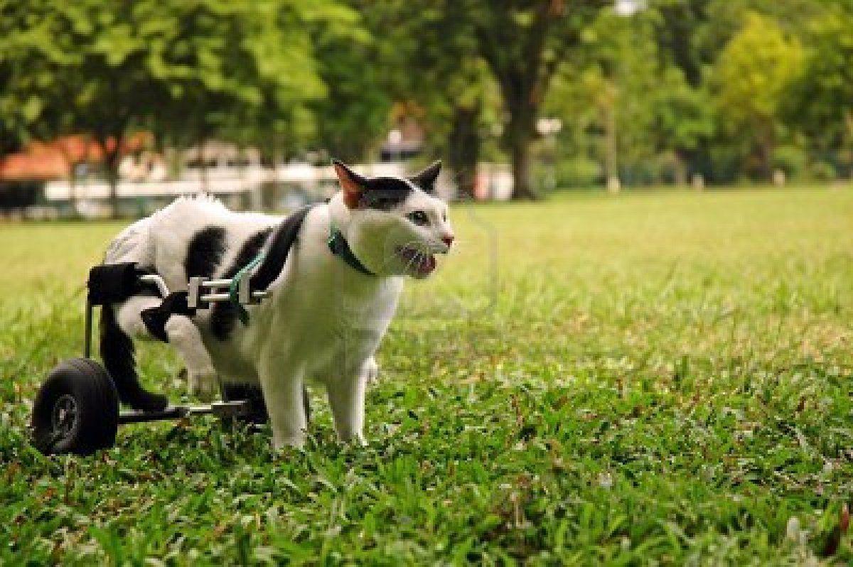 Stock Photo Dog Wheelchair Diy Dog Wheelchair Animals
