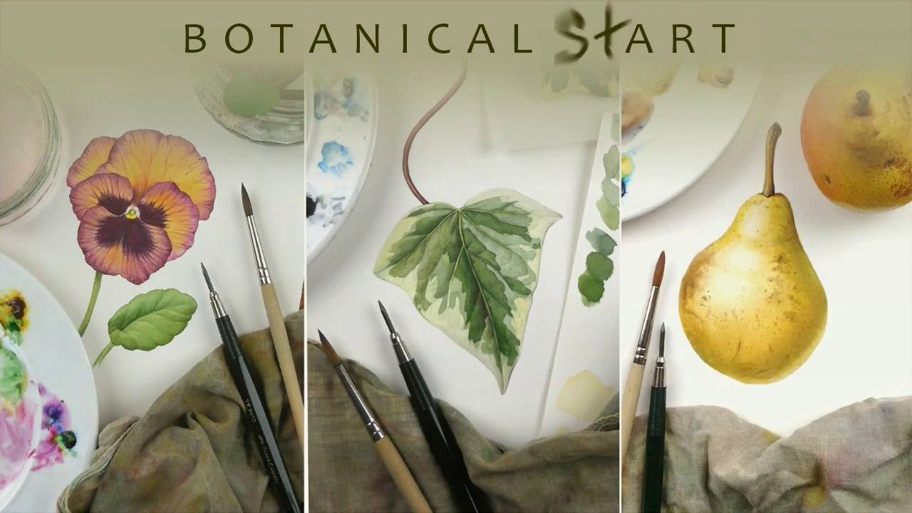 Watercolour Techniques Used For Botanical Art Youtube