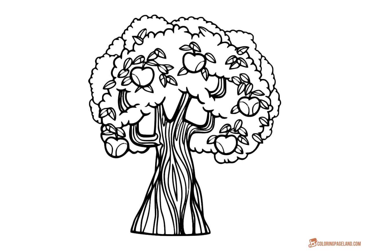 Apple Tree Pictures To Color Teachersmag Com Seasons Kindergarten Seasons Worksheets Tree Coloring Page