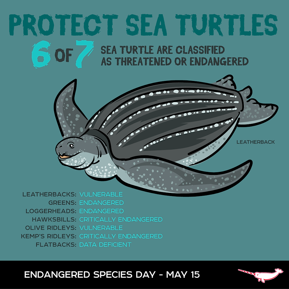SEA TURTLES Turtle, Endangered sea turtles