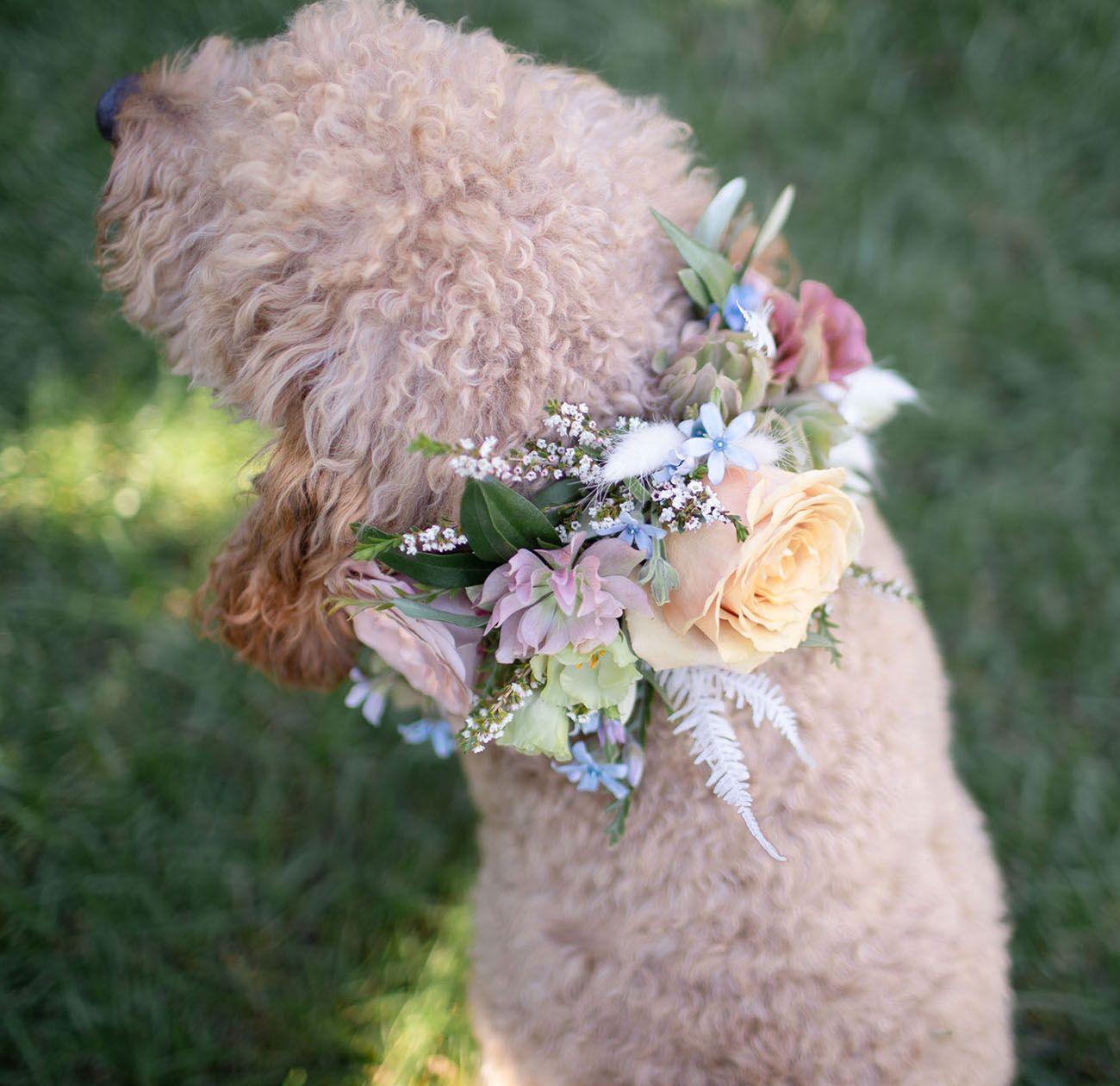 Diy floral dog collar diy wedding flowers diy dog
