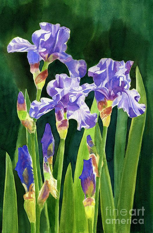 Lavender Irises And Buds With Background Art Print by Sharon Freeman.  All prints are professionally printed, packaged, and shipped within 3 - 4 business days. Choose from multiple sizes and hundreds of frame and mat options.