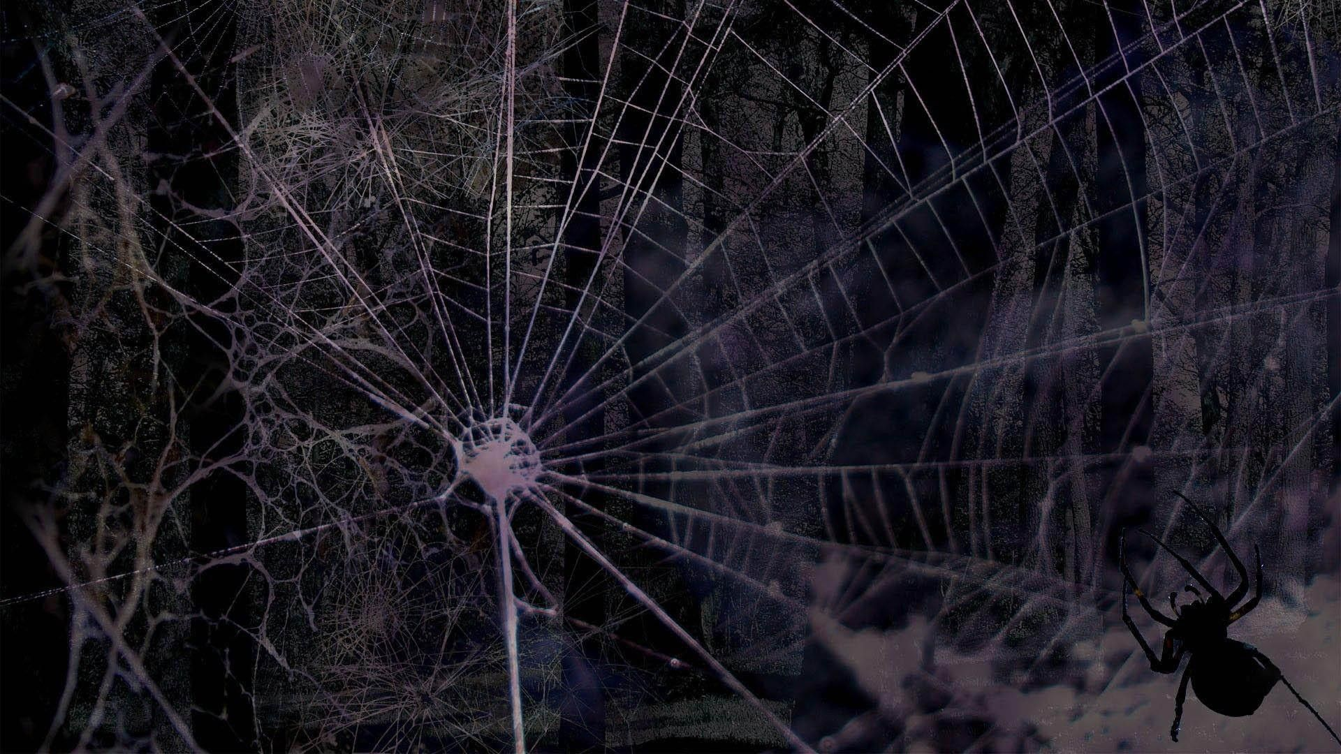 Spider Web Wallpapers 19 Top Free Spider Web Backgrounds For Tablet Amazing Hd Wallpapers Spiders Scary Spider Web