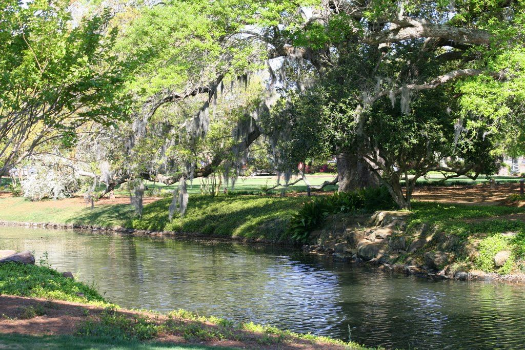 Live oaks at the Grand Hotel, Point Clear, Alabama. Live