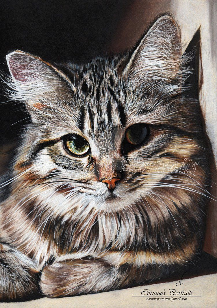 Pin By Samantha Brookes On Cats Pinterest