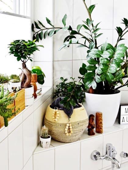 Es gibt eine ganz einfache Lösung, wie du dein Badezimmer easy - pflanzen für badezimmer