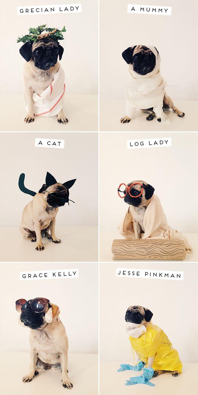 #Pugs: Masters of Disguise. @Amanda Snelson Snelson Stewart