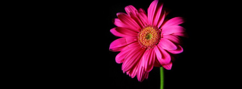 Flower Facebook Covers, Flower FB Covers, Flower Facebook Timeline Covers, Flower Facebook Cover Images