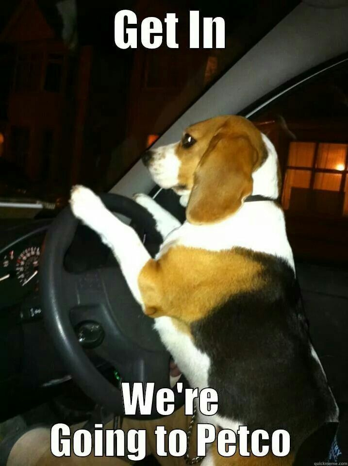 Cute Beagles Image By Gina Edwards On Animals