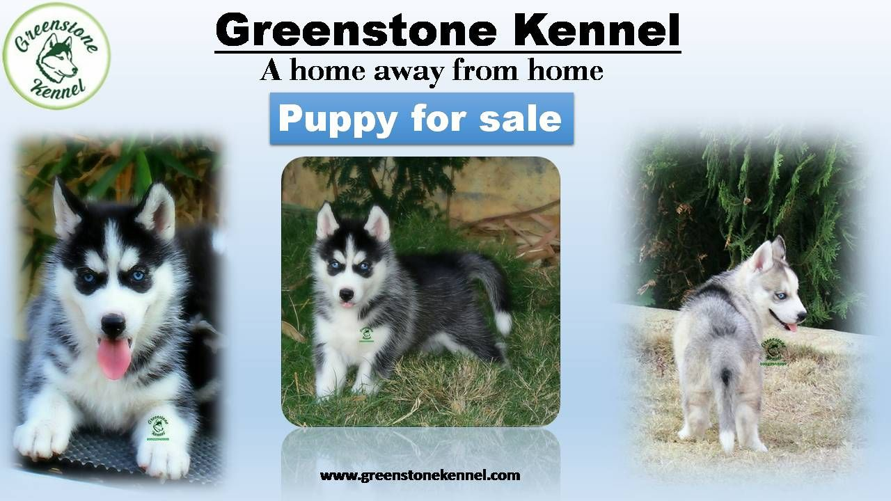 Greenstone Kennel Pune S Best Kennel Which Provides The Best