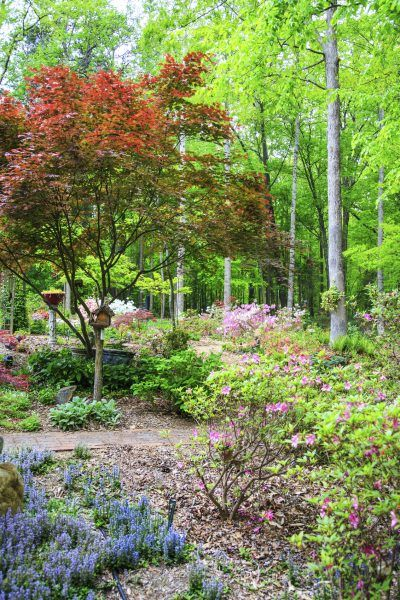 Zone 7 Plants: Learn About Planting A Garden In Zone 7 ...