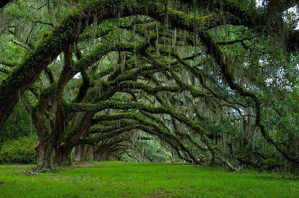 Gli alberi più belli del mondo (20 Foto)