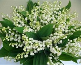 Lily of the valley small white bell shaped flowers available in lily of the valley small white bell shaped flowers available in the summer mightylinksfo