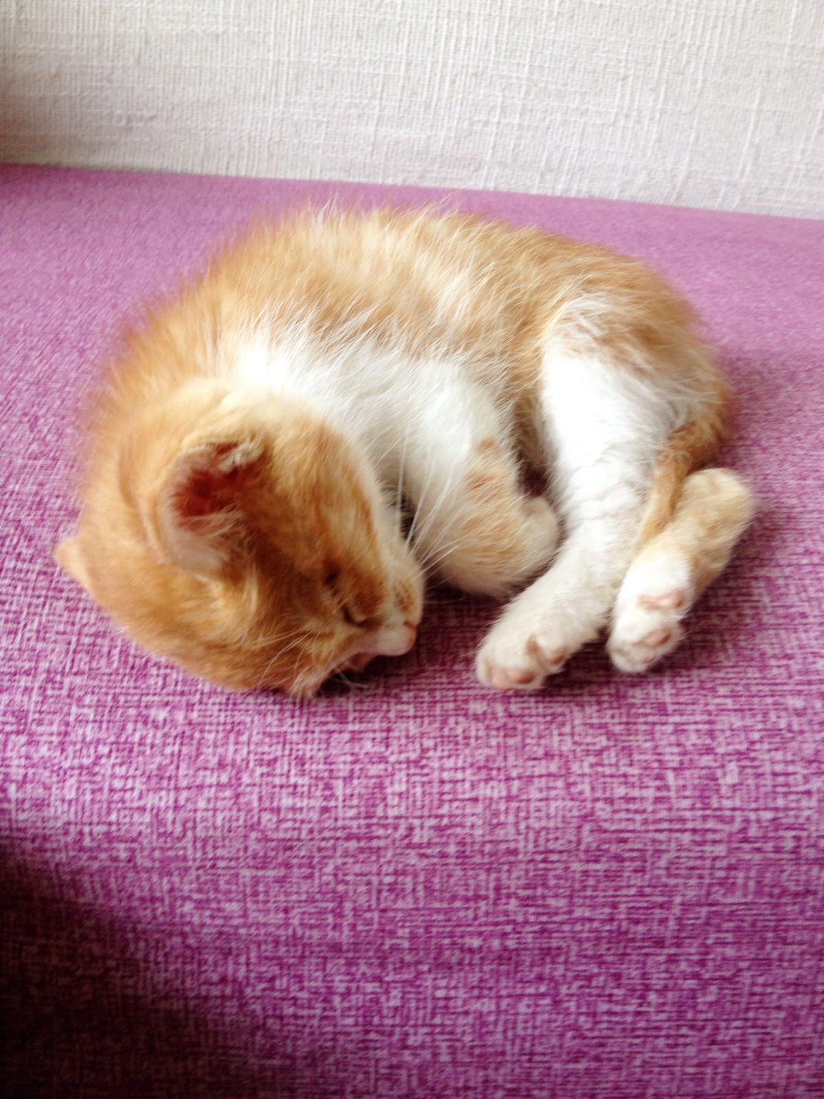 cute kitty~