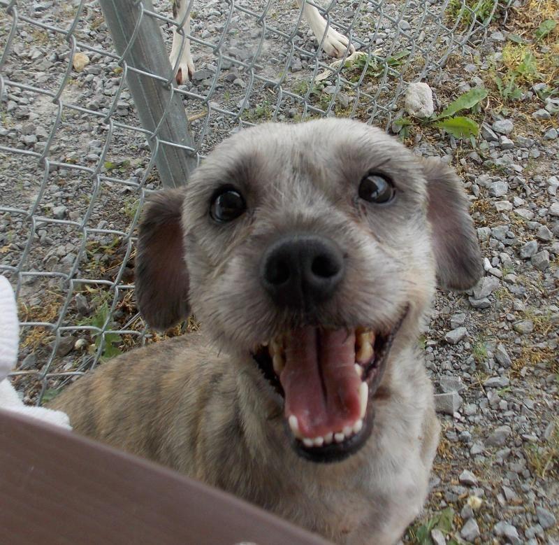 Adopt Ewok on Cairn terrier mix, Terrier mix dogs
