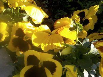 Flowers (c) Daniela Cavallo
