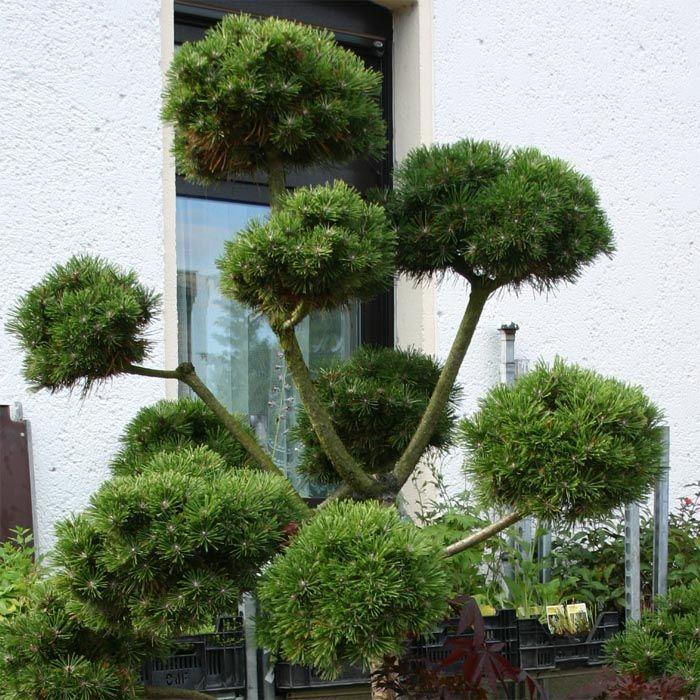 baume fur den vorgarten | rheumri.com - Baume Fur Den Vorgarten