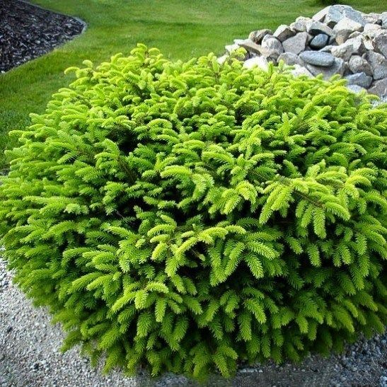 Image Result For Short Bushes For Front Of House 400 x 300