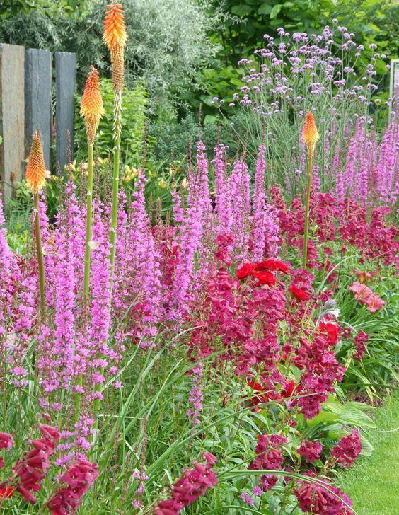 Stauden \u2013 Pflanzen, Pflege und Tipps Gardens - garten selbst gestalten tipps
