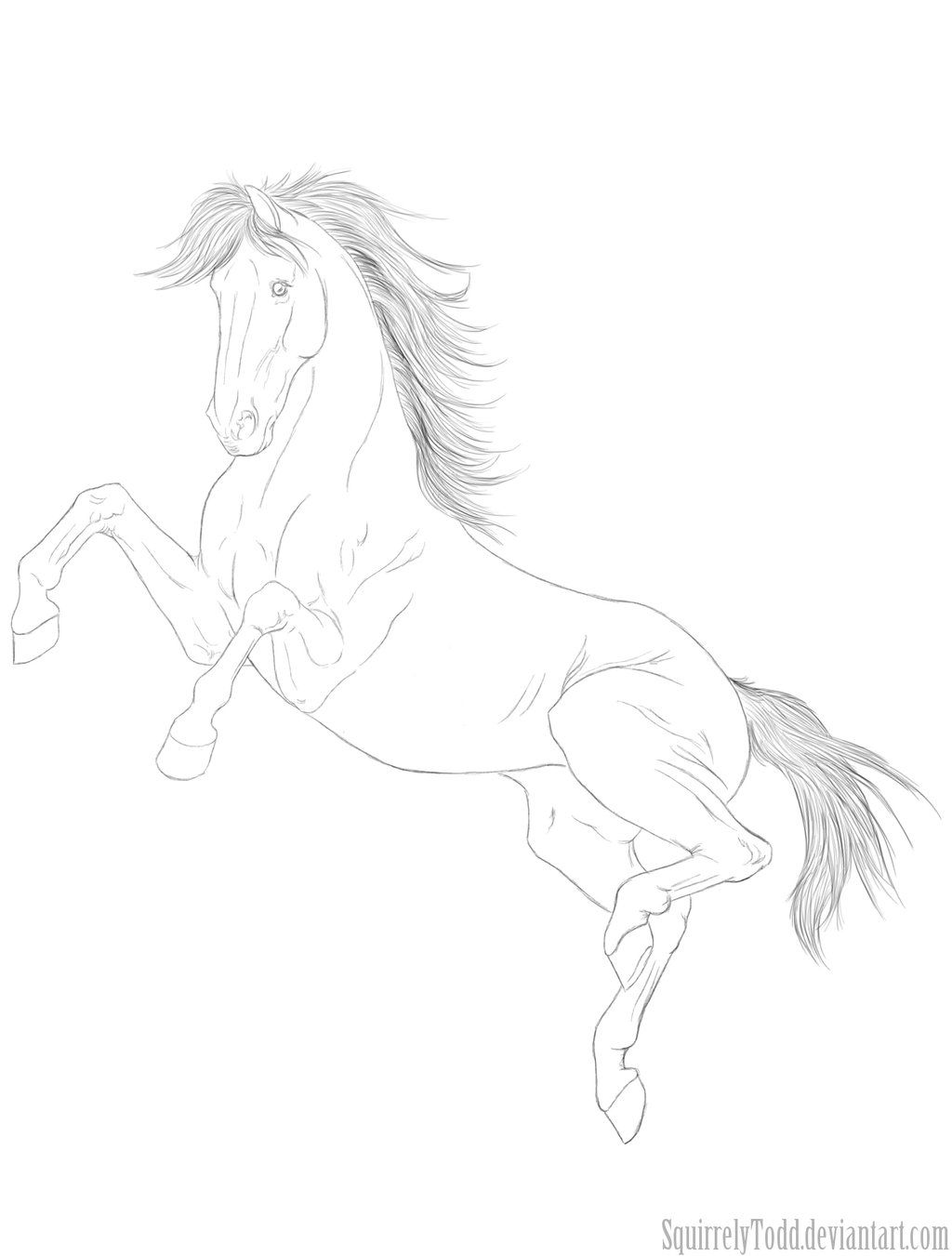 Jump For Joy Horse Coloring Pages Horse Coloring Drawings [ 1351 x 1024 Pixel ]