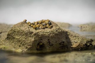 """""""The Race is On"""" Hermit crabs """"racing"""" in Haiti."""