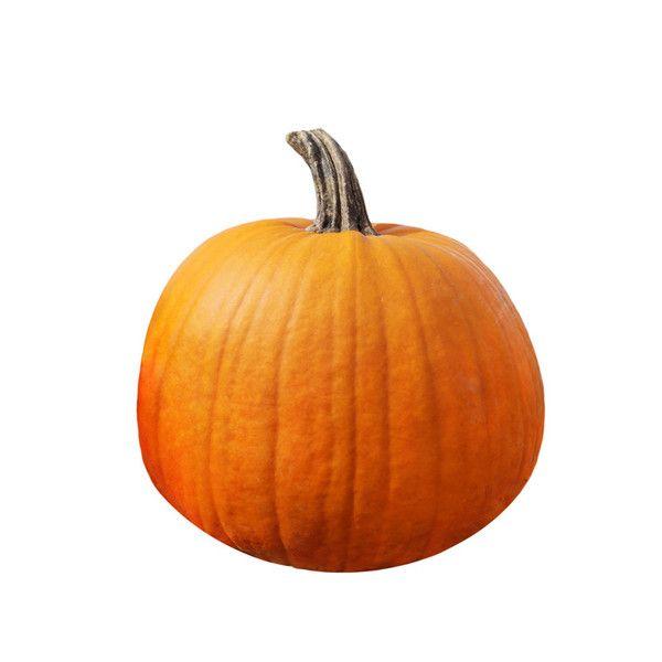 Pumpkin Seed-Jack O' Lantern Seed in 2020 | Pumpkin, Fall ...