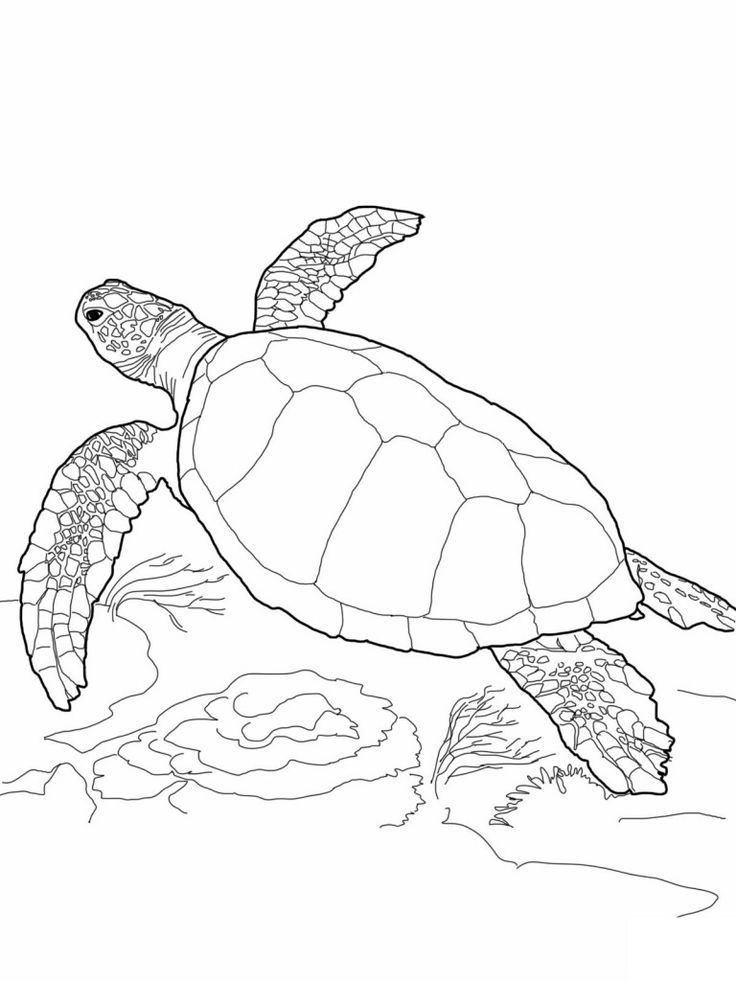 Free Printable Turtle Coloring Pages For Kids Turtle Coloring Pages Turtle Drawing Sea Turtle Drawing