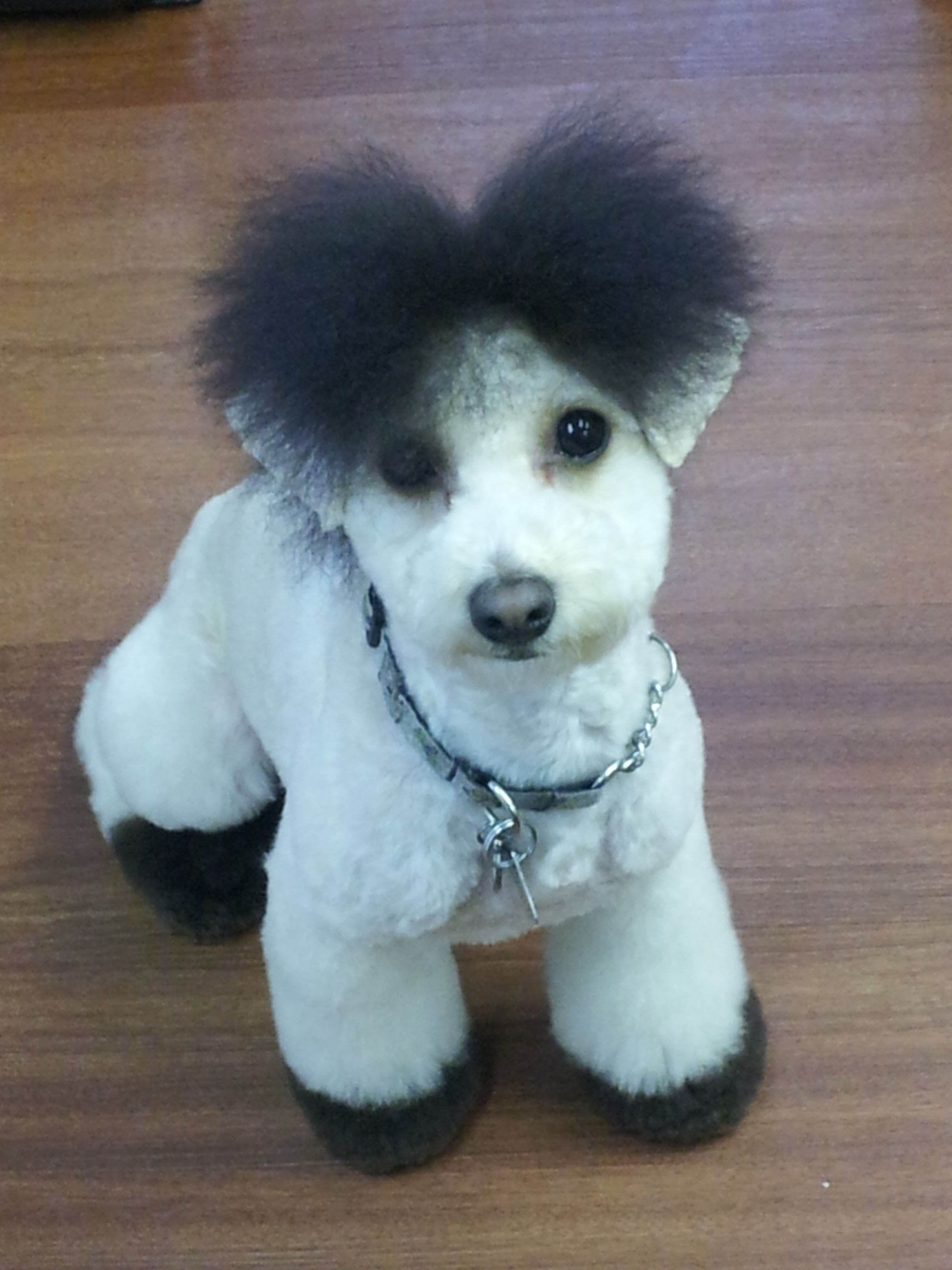 Runa As A Cute Horse Poodle Dog Creative Grooming Dog Grooming Styles Poodle Puppy
