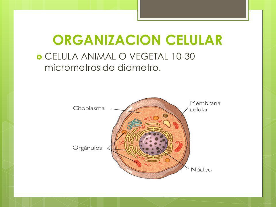 Organizacion Celular Organizacion Aprendizaje Celulas