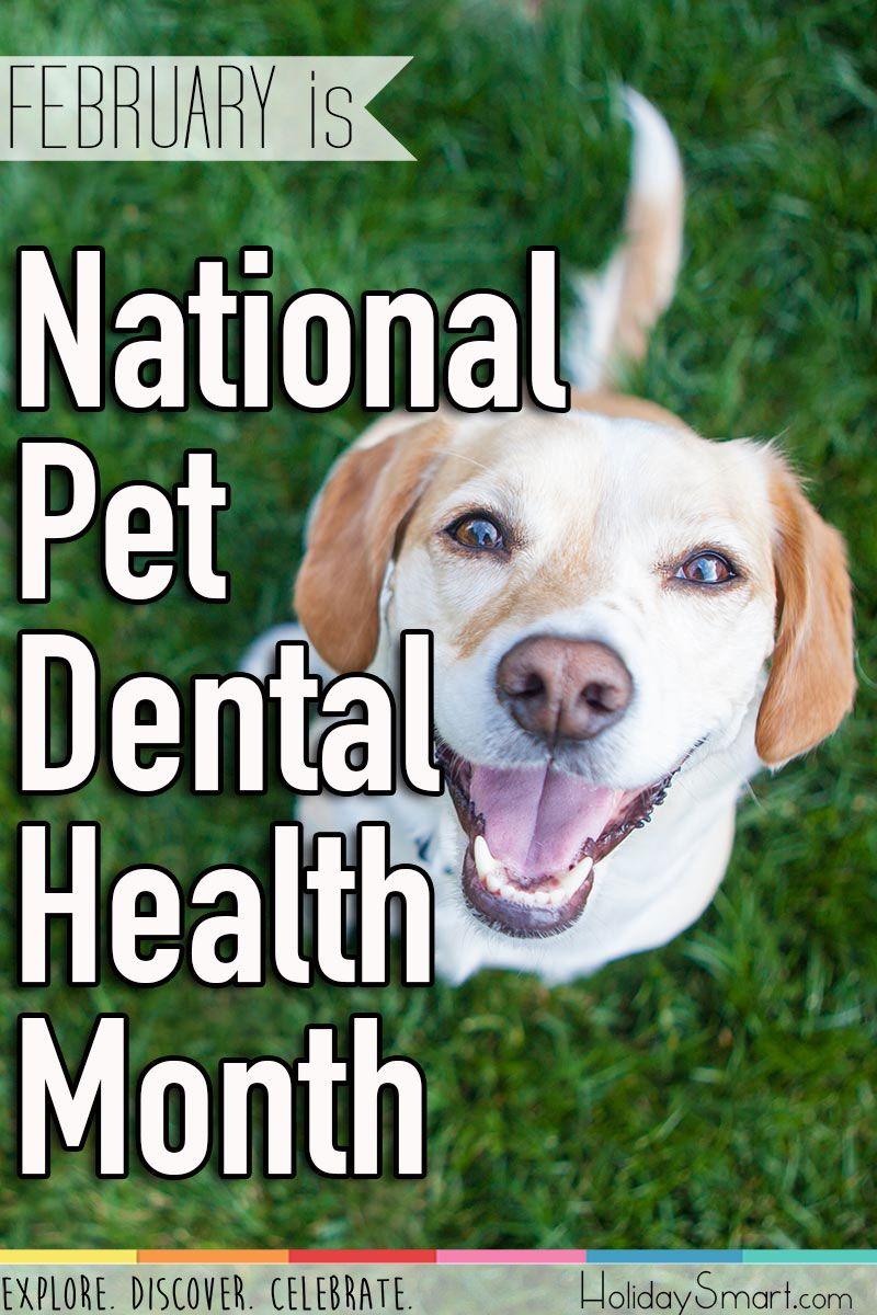 February is National Pet Dental Health Month Dental