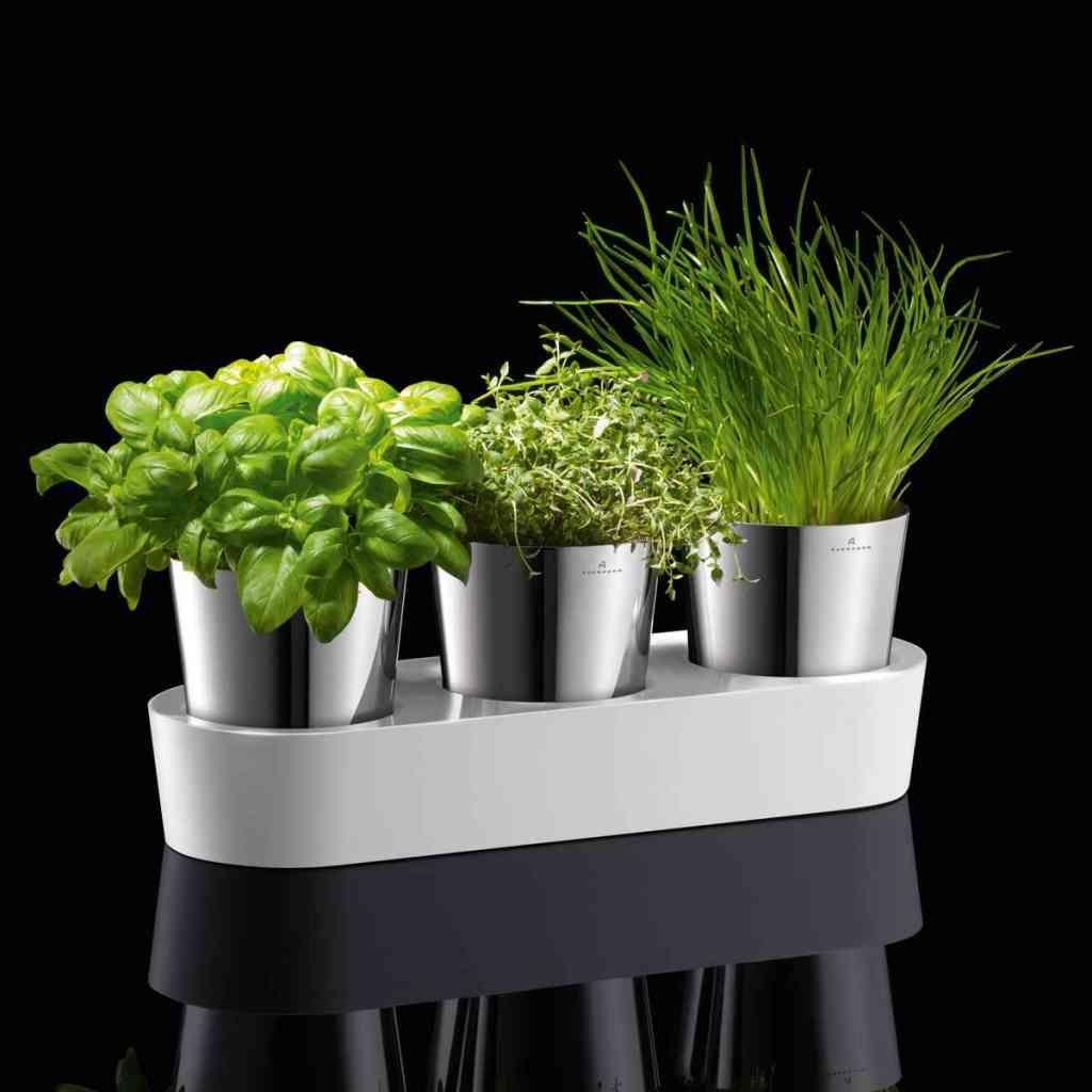 gepinned von jasmin koch livingtools gmbh auerhahn kr utergarten herbs home selbstbew ssernd. Black Bedroom Furniture Sets. Home Design Ideas