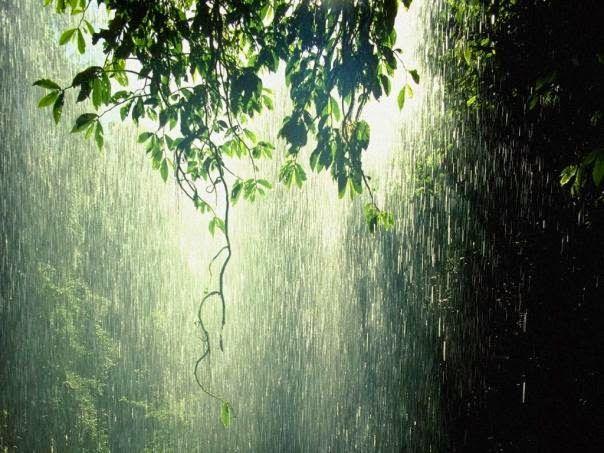 Raining Pictures Kerala Thekkady Monsoon Tour Packages Rain Wallpapers Rain Photo Rain Photography