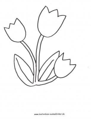 ausmalbild tulpen zum kostenlosen ausdrucken und ausmalen. ausmalbilder   malvo