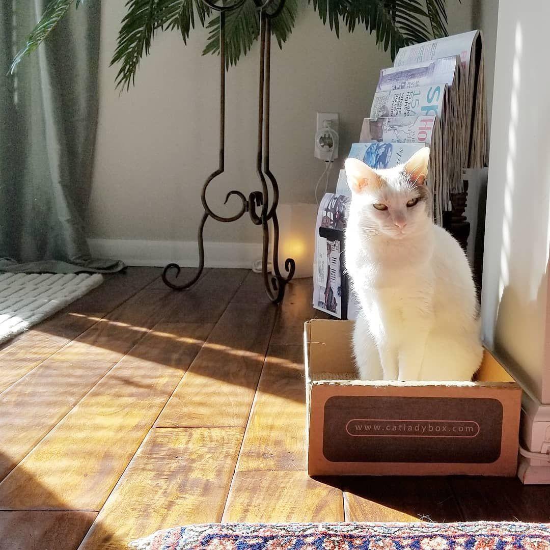 Mia enjoying the sunshine in her CatLadyBox Enjoy the