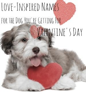 valentines names for a dog