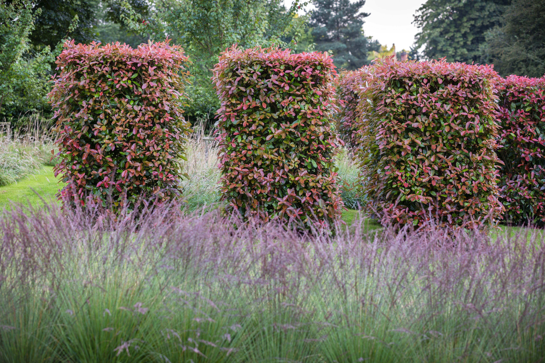 Pin by Anna on landscape design ideas | Pinterest | Allen gardens ...