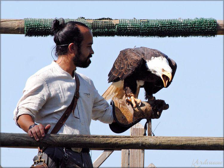Photo Pygargue A Tete Blanche Zoo De La Fleche Avec Images