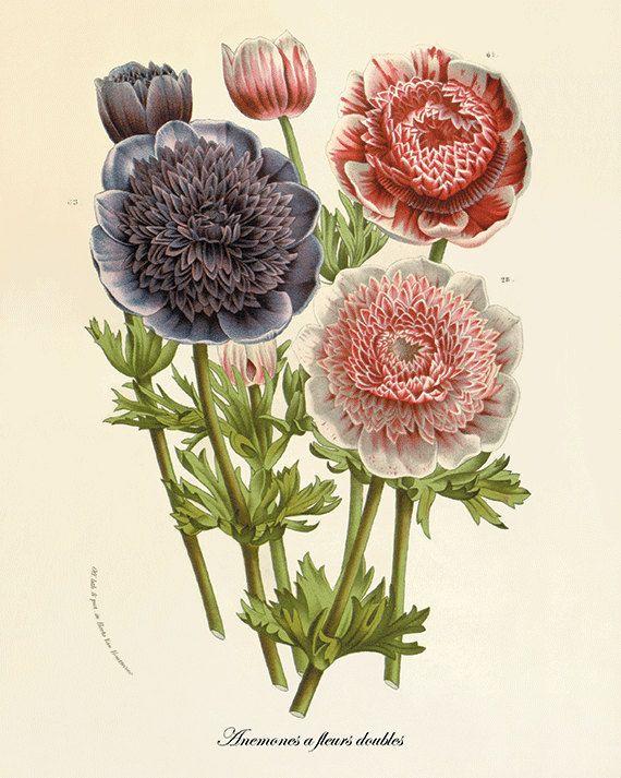 Anemone Antique Flower Art Print Botanical Prints Flower Wall Etsy In 2020 Flower Prints Art Flower Drawing Botanical Prints